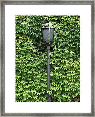 Parisian Lamp And Ivy Framed Print by Yoel Koskas