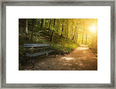 Framed Print featuring the photograph Park Bench In Fall by Chevy Fleet