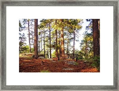 Park Bench In Peaceful Woods Setting Framed Print