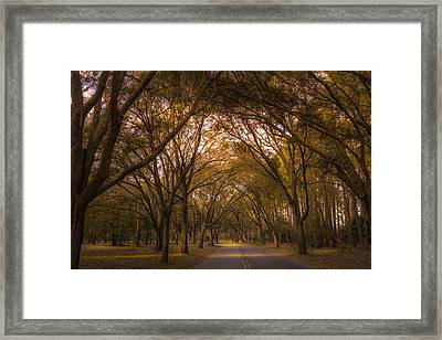 Park Overhang Framed Print by Marvin Spates
