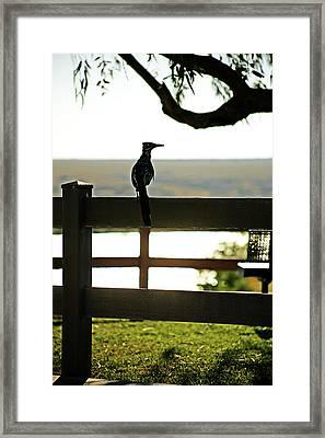 Park Roadrunner Framed Print