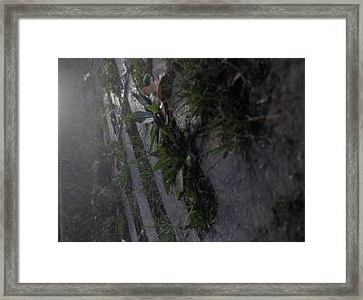 Park Sewer 2 Framed Print by Jackelyn Lazaro