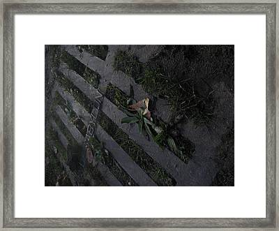 Park Sewer Framed Print by Jackelyn Lazaro