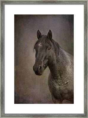 Framed Print featuring the photograph Parker by Debby Herold
