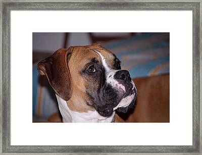 Parker The Boxer 02 Framed Print