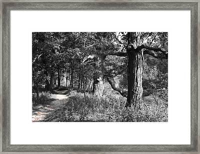 Parkland Trail Framed Print