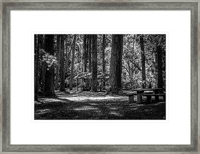 Parque Estadual-horto-campos Do Jordao-sp Framed Print