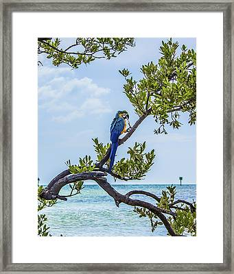 Framed Print featuring the photograph Parrot Above The Aqua Sea by Paula Porterfield-Izzo
