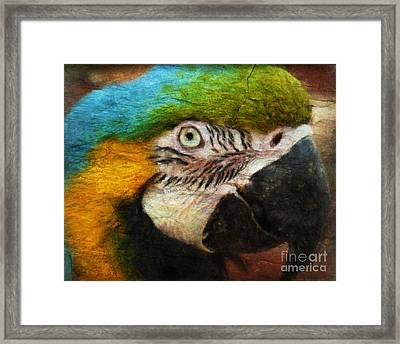 Parrot Framed Print by Angela Doelling AD DESIGN Photo and PhotoArt
