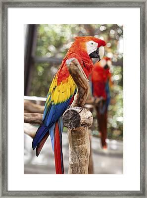 Parrot Colors Framed Print