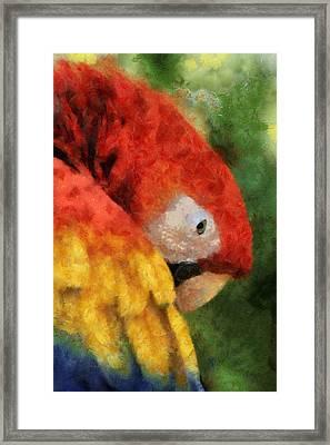 Parrot Framed Print by Elaine Frink