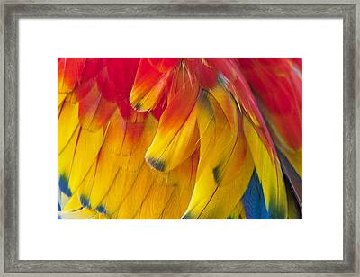 Framed Print featuring the photograph Parrot Feathers by Ken Barrett