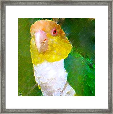 Parrot Grace Framed Print