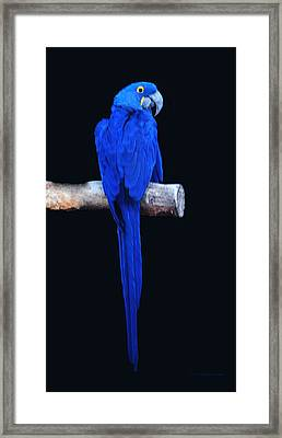 Parrot Perfection Framed Print