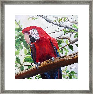 Parrot Portrait Framed Print by Marilyn  McNish