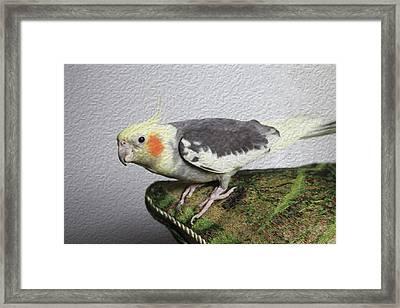 Parrot Scared Cat Framed Print by Natalia Ochkalo