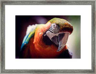 Parrot Selfie Framed Print by Fbmovercrafts