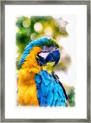 Framed Print featuring the painting Parrot Watercolor by Edward Fielding