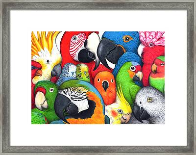 Parrotheads Framed Print by Don McMahon
