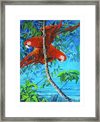 Parrots In Canopy Above Framed Print