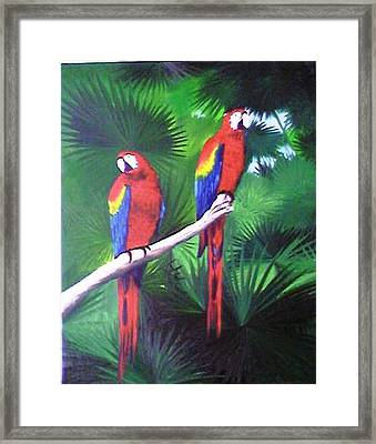 Parrots Molly And Polly Framed Print