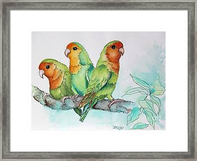 Parrots Trio Framed Print