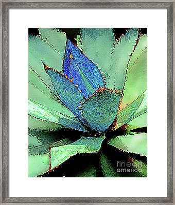 Parry Agave-2 Framed Print by Linda Parker