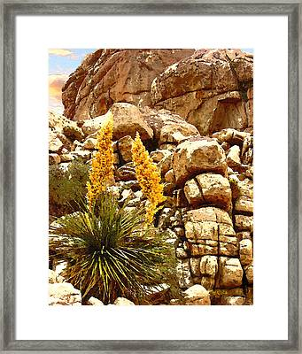 Parry Nolina Framed Print by Timothy Bulone