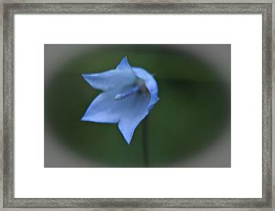Framed Print featuring the photograph Parrys Bell Flower by Daniel Hebard