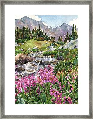 Parry's Primrose Framed Print by Anne Gifford