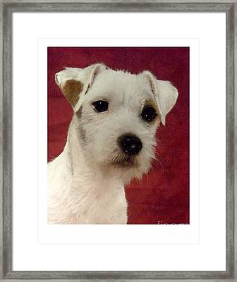 Parsons Russell Terrier - Jack Russell 285 Framed Print by Larry Matthews