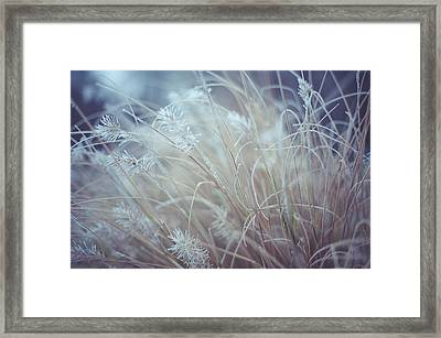 Part Of Translucent Reality. White Grass Framed Print by Jenny Rainbow