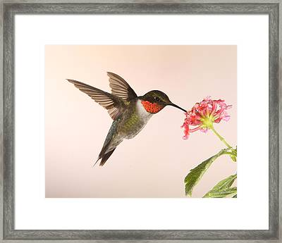 Partaking Framed Print by Gerry Sibell