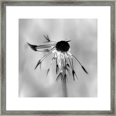 Partial Dandy Framed Print