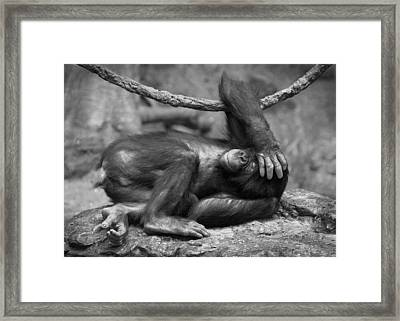 Party Animal Framed Print by Bud Hensley