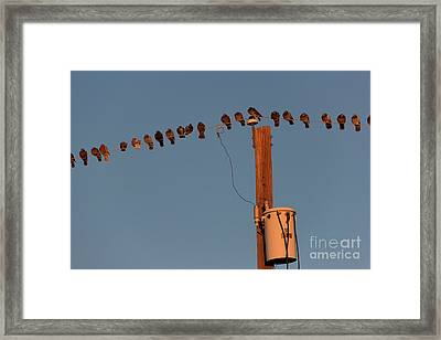 Party Line Framed Print by Jon Burch Photography