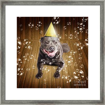 Partytime For A Staffie Birthday Dog Framed Print