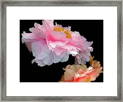 Pas De Deux Glowing Peonies Framed Print by Lynda Lehmann
