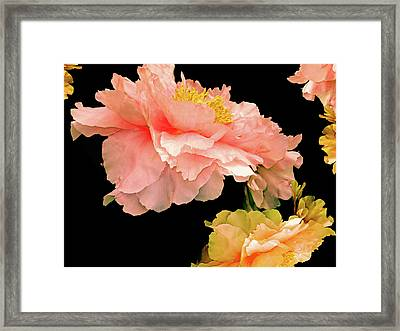 Pas De Deux Peonies With Yellow Framed Print