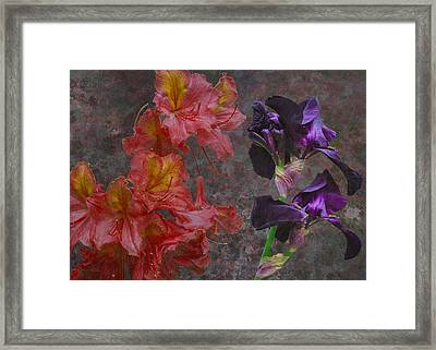 Paso Doble Framed Print by Eric Ewing