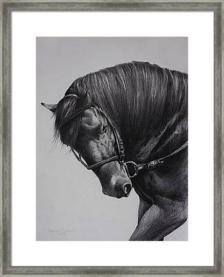 Paso Fino Framed Print by Harvie Brown