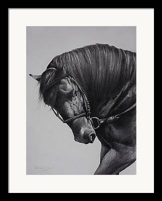 Paso Fino Horse Framed Prints