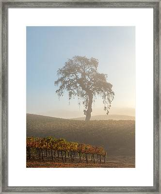 Paso Robles Morning Framed Print by Joseph Smith