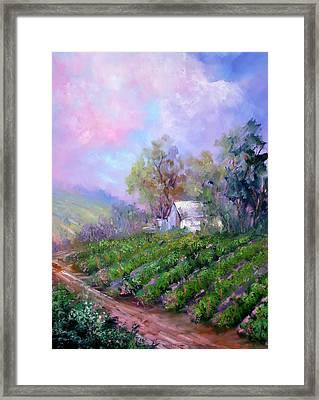 Paso Vineyard Framed Print by Sally Seago