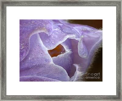 Pasqueflower Framed Print