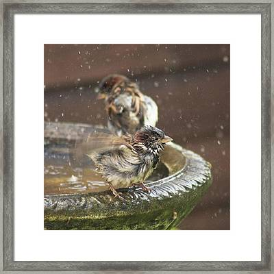 Pass The Towel Please: A House Sparrow Framed Print