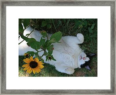 Passed Out Under The Daisies Framed Print by Marna Edwards Flavell