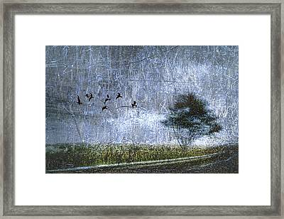 Passing By Framed Print by Carol Leigh