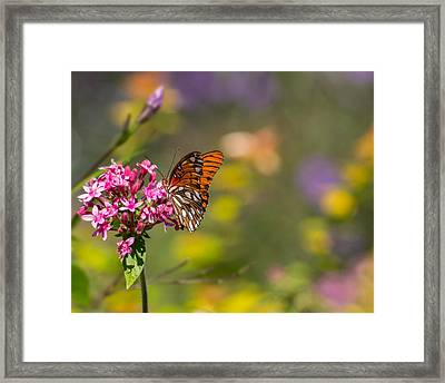 Framed Print featuring the photograph Passion Butterfly  by Julie Andel