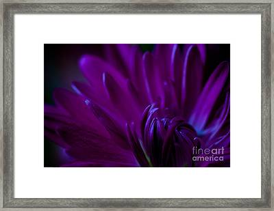 Passion Framed Print by Charles Dobbs